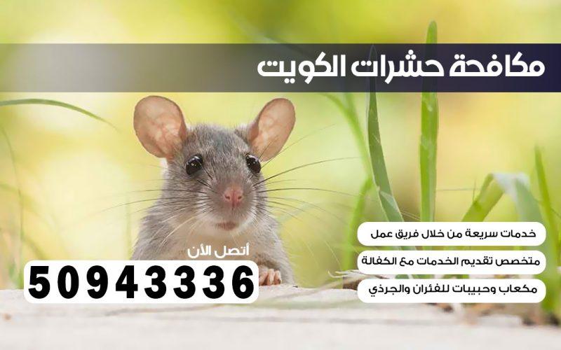 مكافحة قوارض صباح السالم 50943336 بالكويت