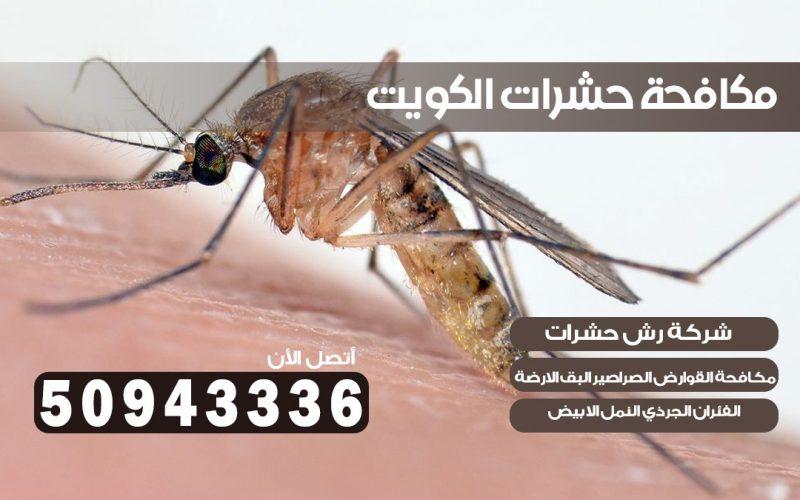 ابادة حشرات السالميه قطعه 12 بالكويت