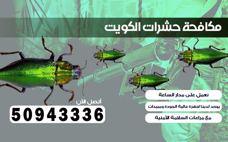 شركة حشرات رأس السالميه