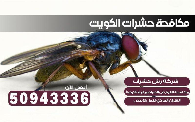 شركه حشرات مبارك الكبير