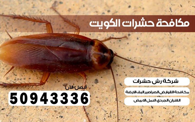 ابادة حشرات الفحيحيل الكويت