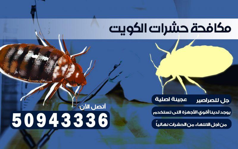 ابادة حشرات ضاحية حطين الكويت