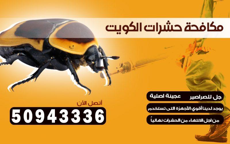 ابادة حشرات السالميه بالكويت