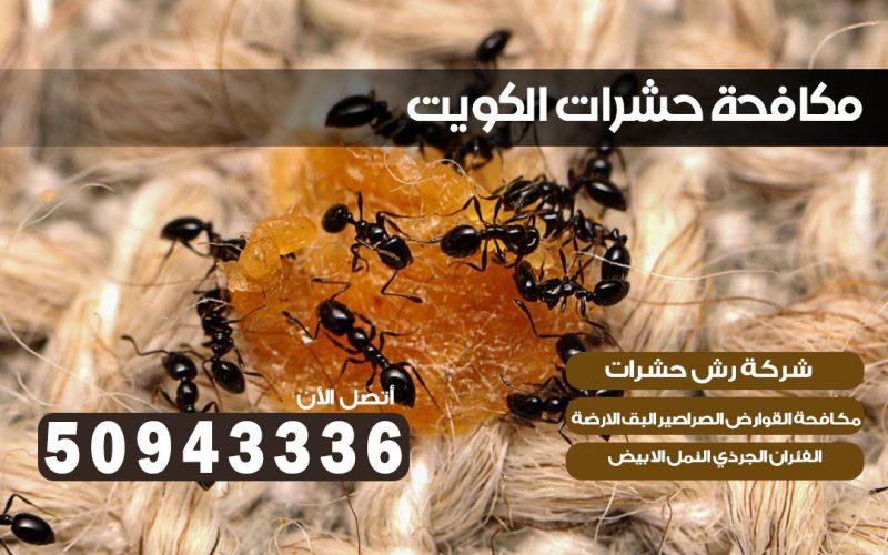 شركة حشرات الشويخ 50943336 بالكويت