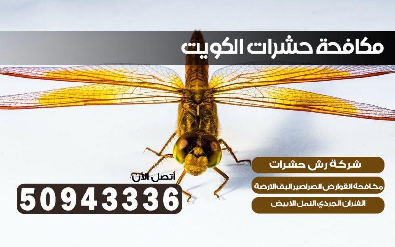 شركة حشرات القيروان