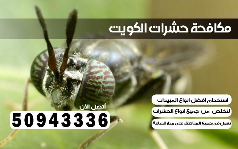 ابادة حشرات اليرموك الكويت