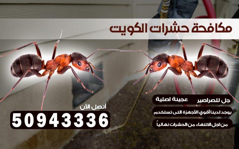ابادة حشرات النزهه بالكويت