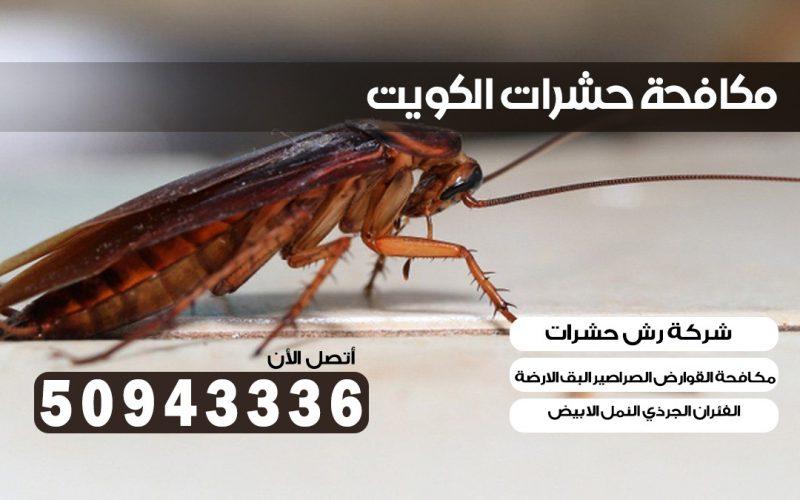 مكافحة الصراصير ميدان حولي 50943336 بالكويت