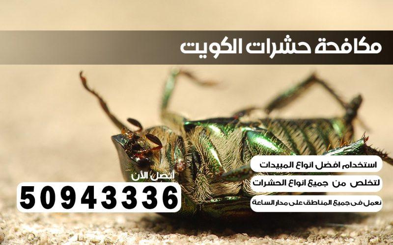 ابادة حشرات كيفان بالكويت