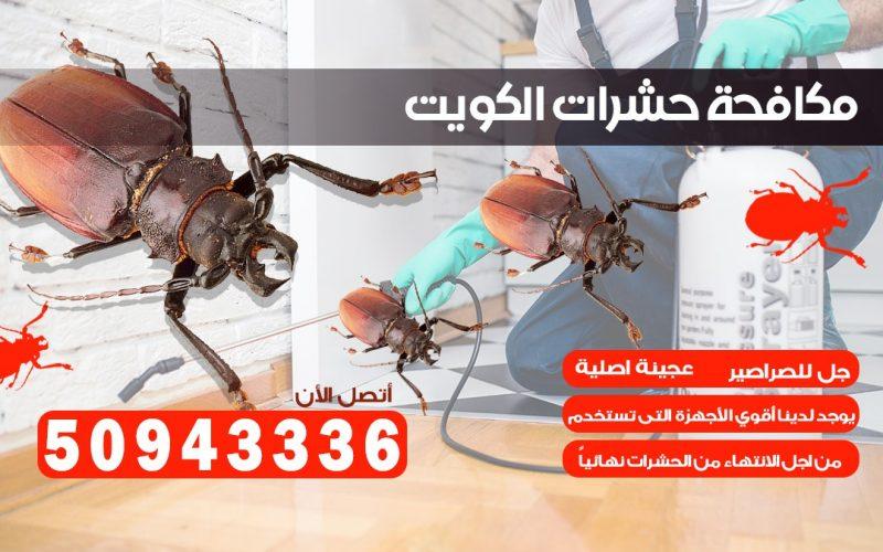 ابادة حشرات الرابيه الكويت
