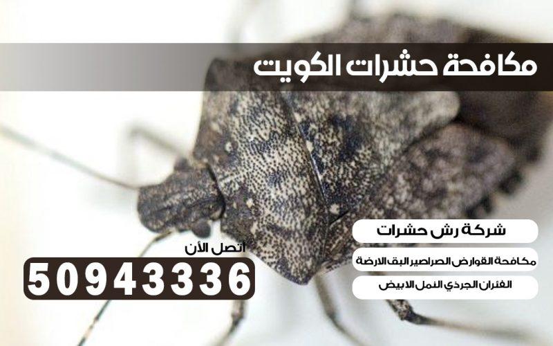 ابادة حشرات غرب الجليب بالكويت