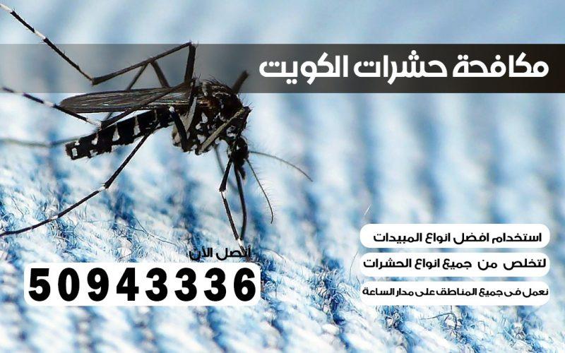 شركة حشرات الخالديه 50943336 الكويت