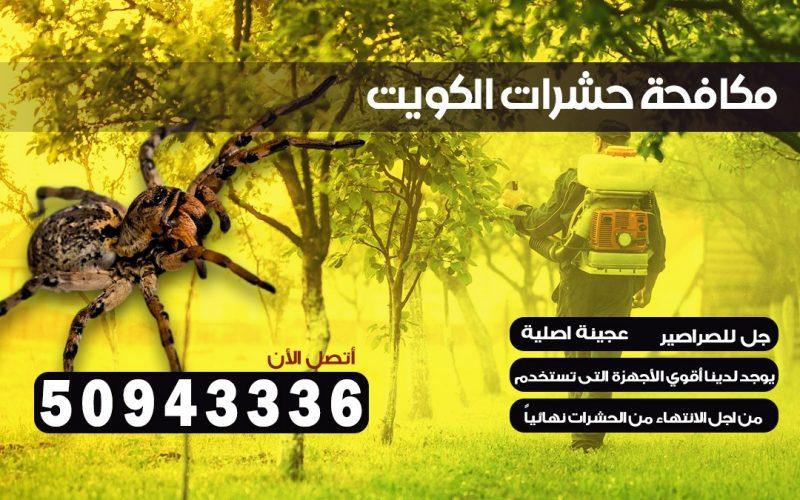 ابادة حشرات الرقعي الكويت