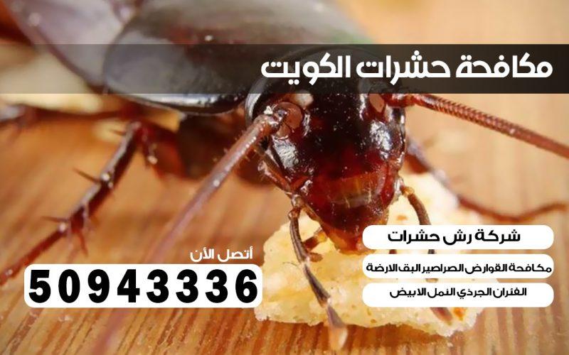 مكافحة صراصير القادسية بالكويت