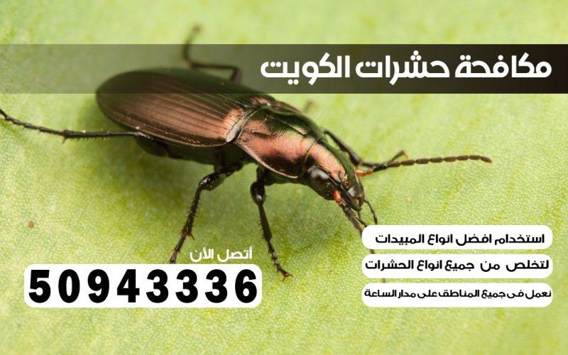 شركة حشرات غرناطه