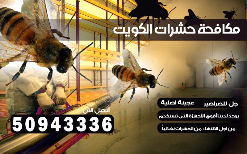 مكافحة الصراصير الجليب بالكويت