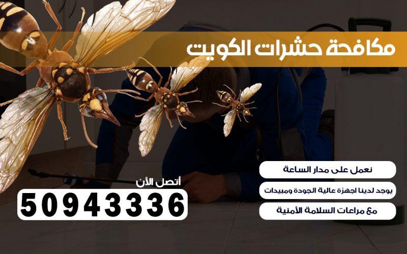 شركة حشرات الرقه
