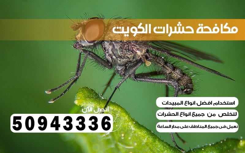 شركة حشرات الأحمدي