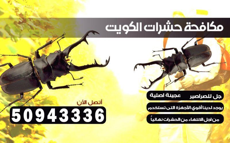 شركة حشرات فهد الأحمد