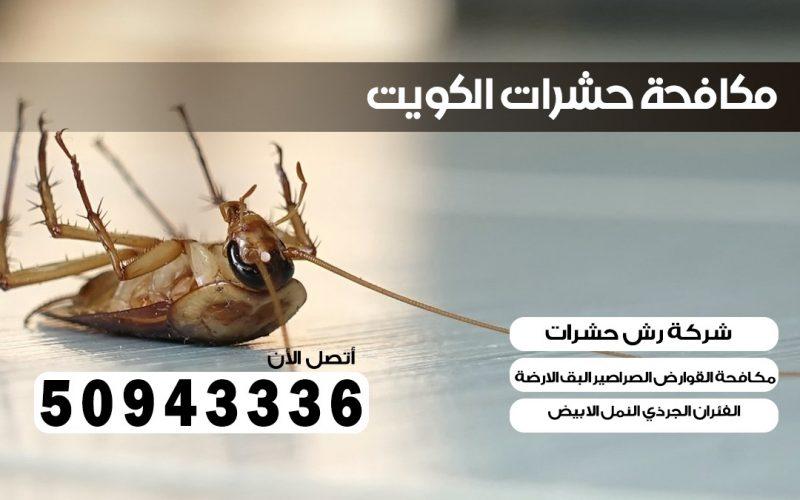 ابادة حشرات الرميثيه