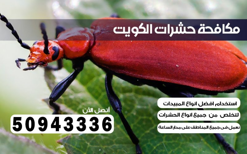 شركة حشرات ابو فطيره بالكويت