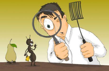 شركة مكافحة حشرات بالكويت 51222132 الصراصير البق بق الفراش الفئران